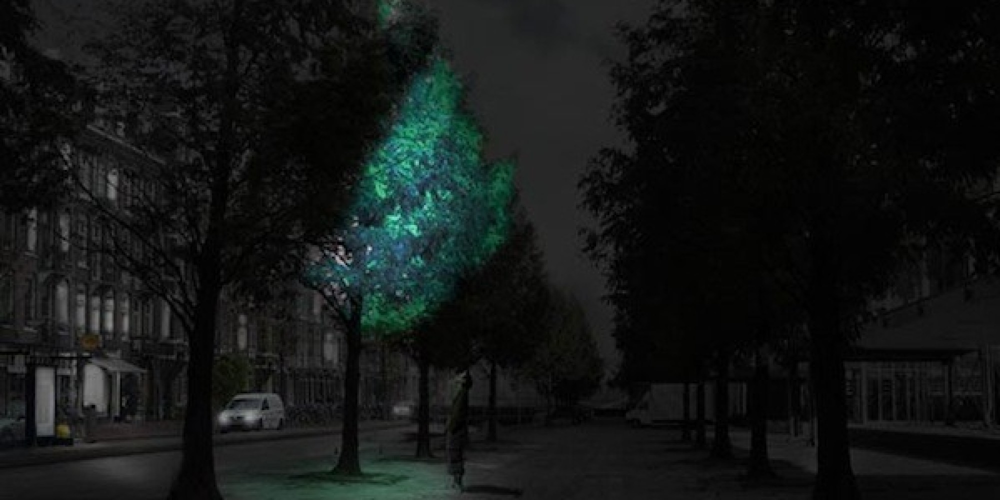 glow in the dark lighting. In The Not So Distant Future, Glow-In-The-Dark Trees Could Replace Street Lights | HuffPost Glow Dark Lighting