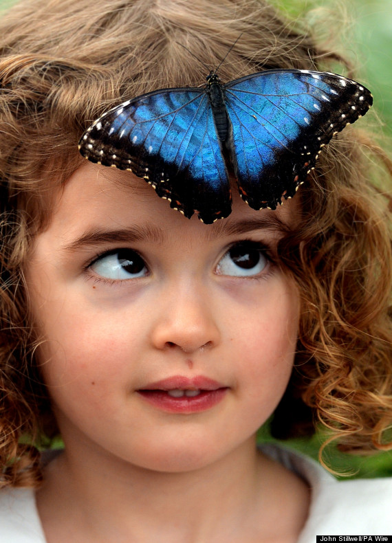 sensational butterflies exhibition