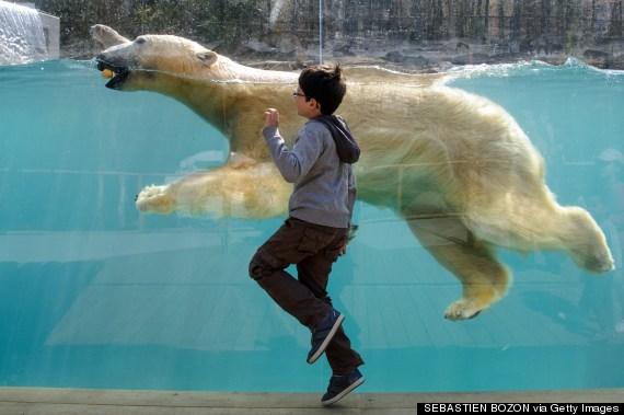 polar bear france
