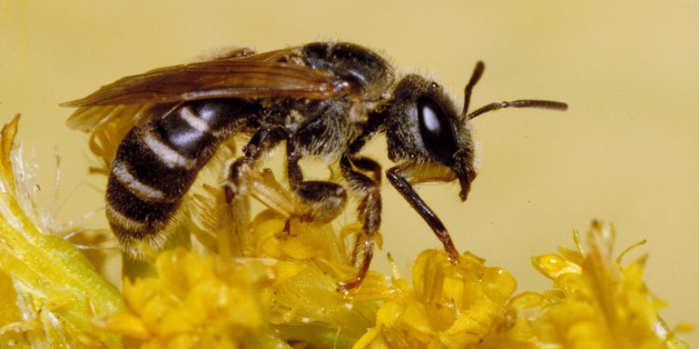 The Worst Places To Be Stung By A Bee