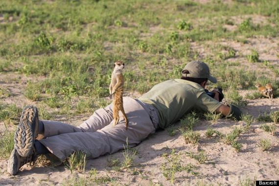 meerkats photographer