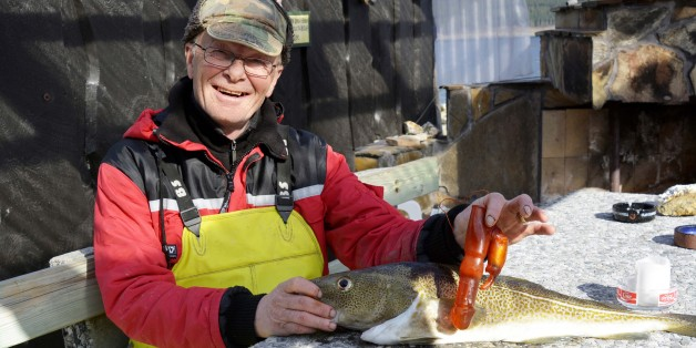 Norwegian fisherman Bjorn Frilund posing with a cod he caught in Rauma, Norway, 10 April 2014. The caught cod beared an unusual finding in its stomach, an orange-coloured plastic adult toy. EPA/ANDERS HAGEN NORWAY OUT