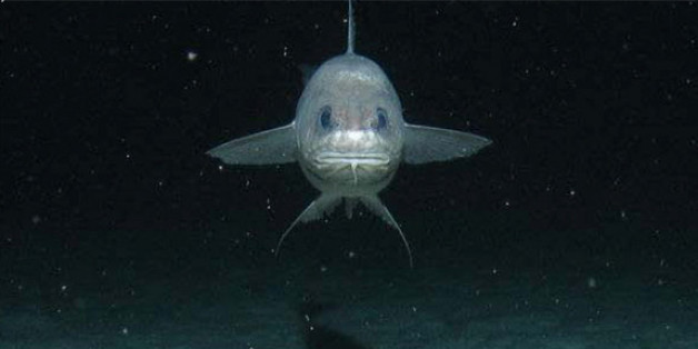 Researchers Take On Kermadec Trench Dive To Find Unknown