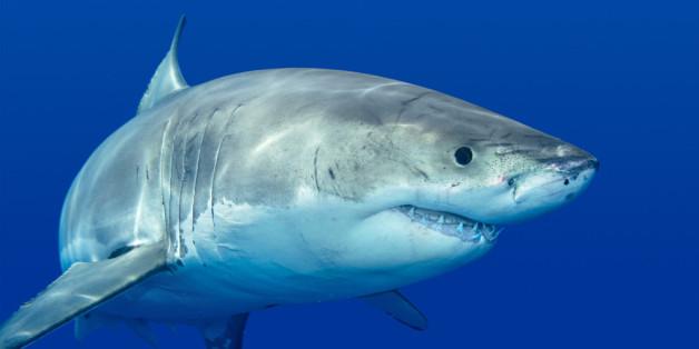 5 tipps wie sie einen hai angriff überleben huffpost deutschland