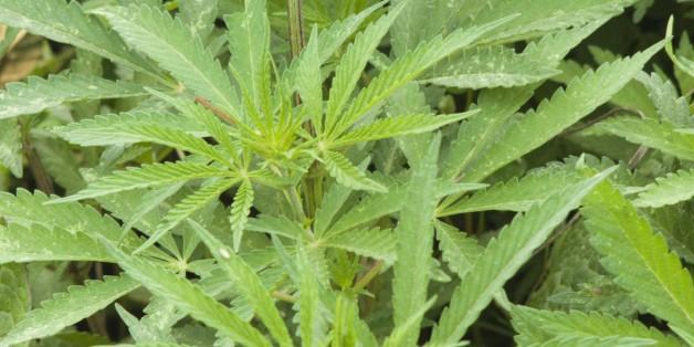 Supporters Mobilize For Florida Medical Marijuana Initiative