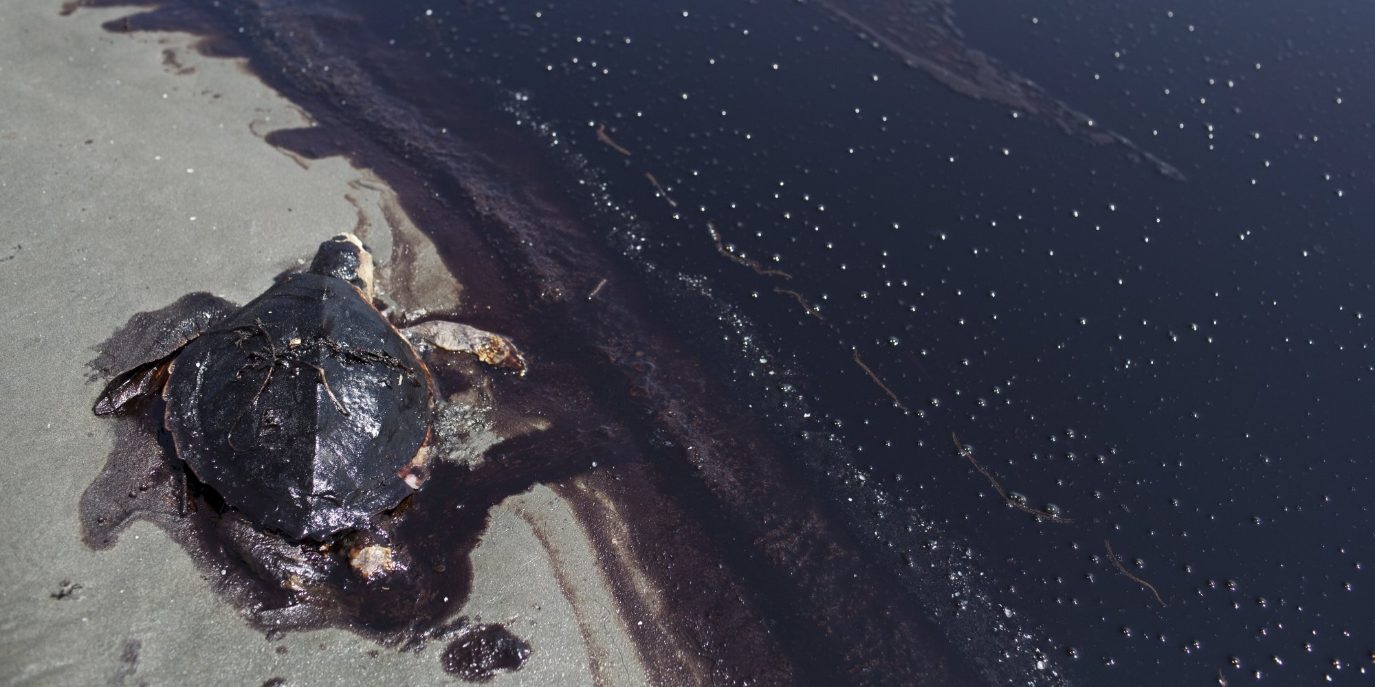 four years later bp oil spill still taking a toll on gulf fisherman