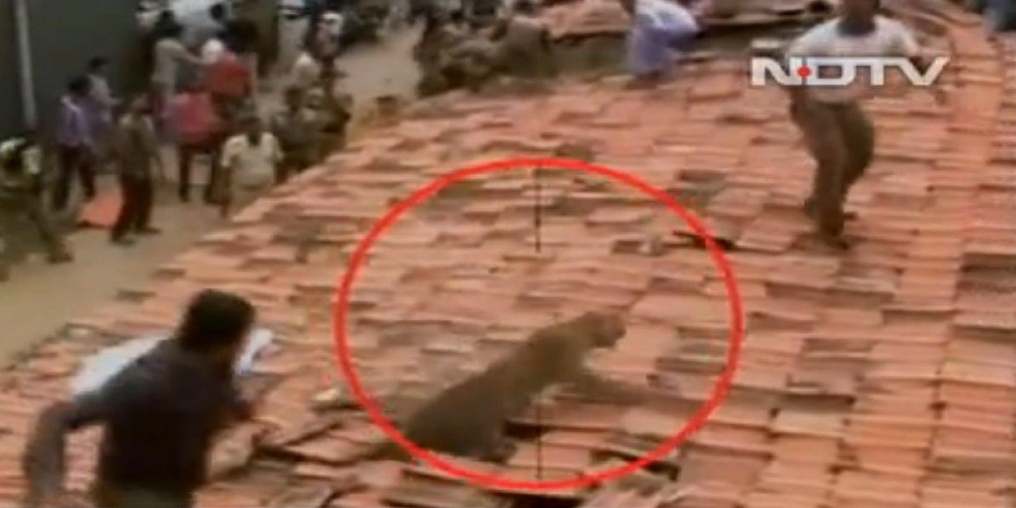 Tiger Attacking Human