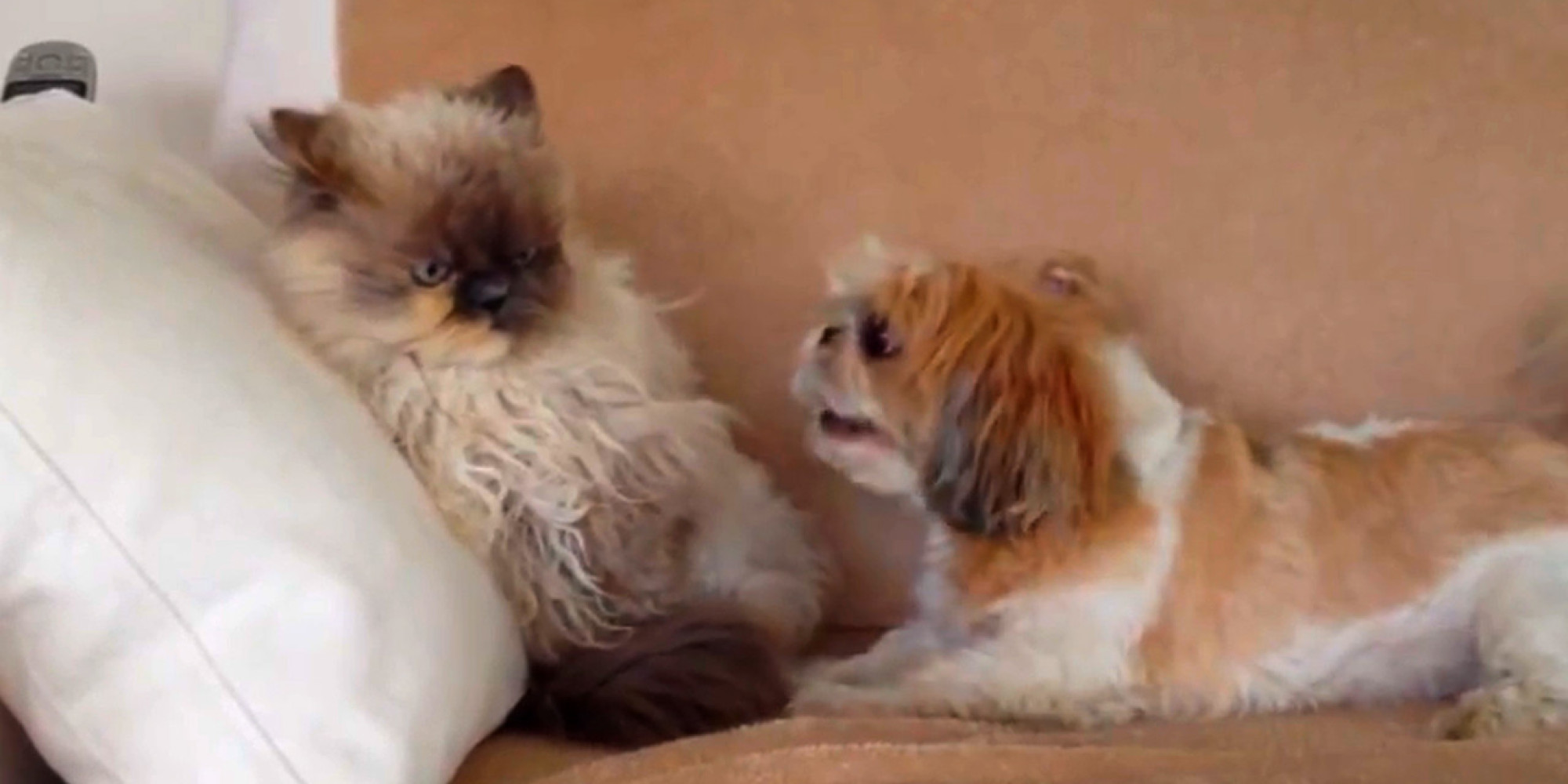Heres Proof That Dogs Just Desperately Want To Be Friends With - Dogs annoying cats with friendship