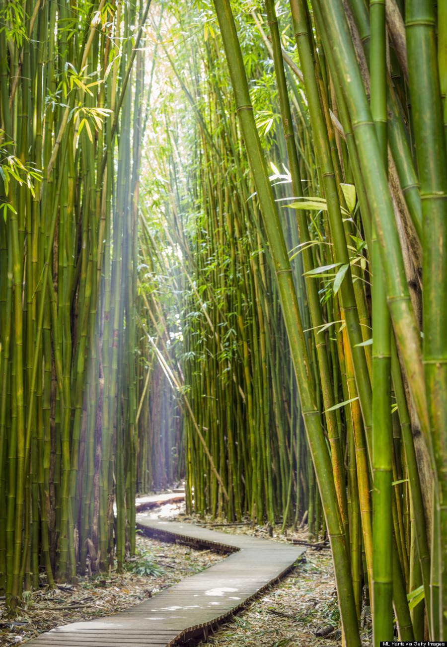 bamboo maui