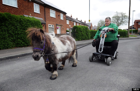 miniature horses mobility scooter