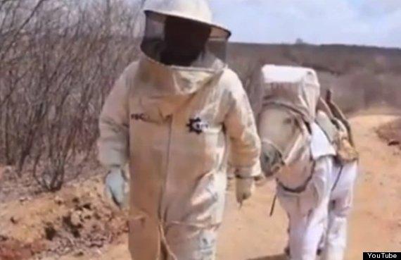 boneco beekeeping donkey