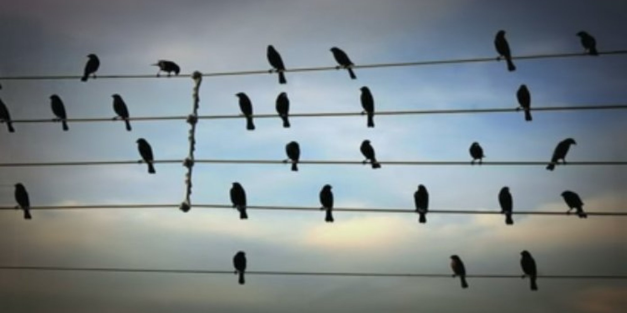 Birds On A Wire Song - WIRE Center •