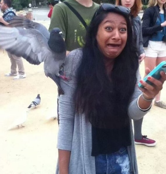 pigeon fille