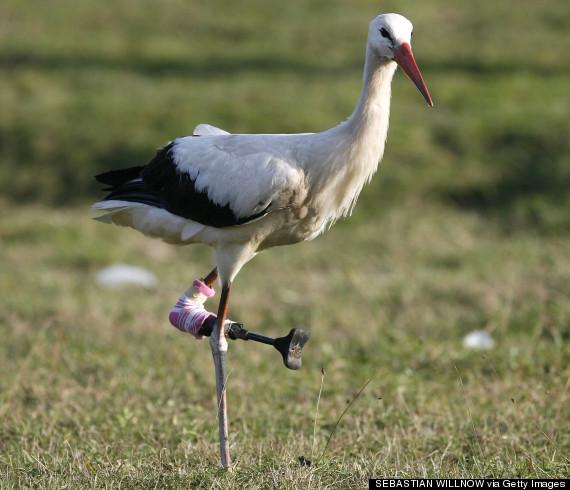 stork prosthetic