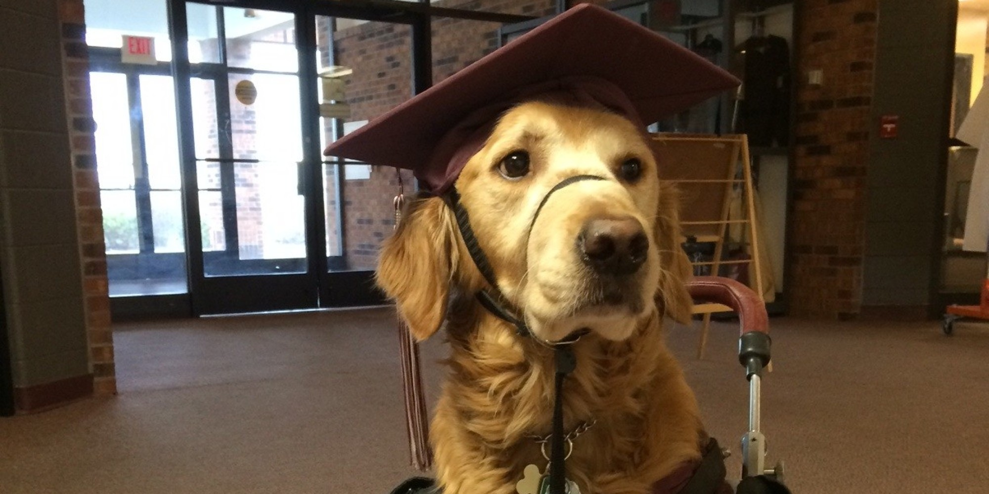 Loyal Service Dog Dons Cap And Gown To Join 17-Year-Old At Her High ...
