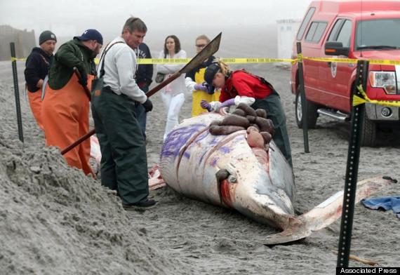 graffiti dead whale