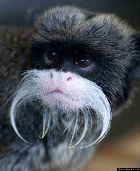 monkey stolen