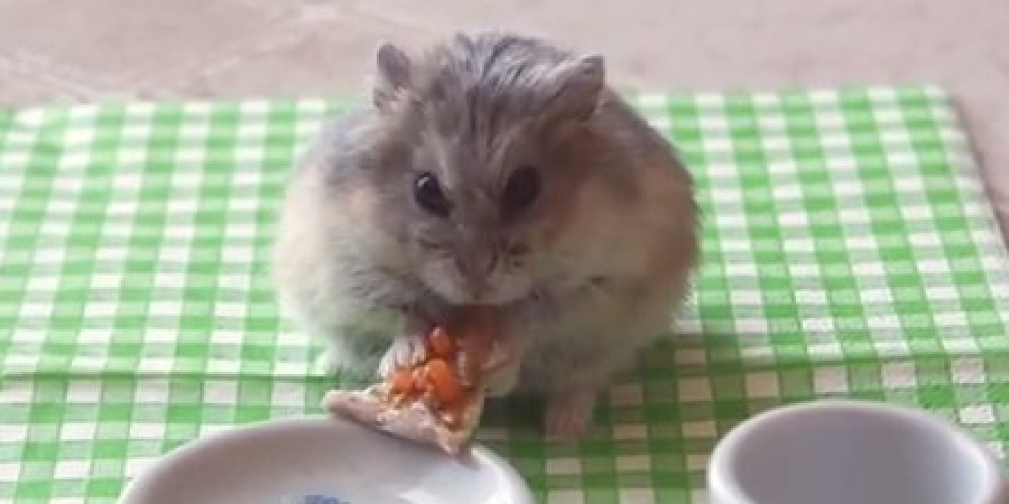 Cat Eats Baby Mouse