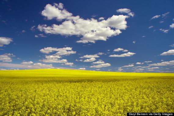 beautiful field saskatchewan