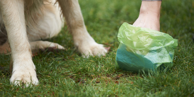 Why to Use Dog Poop Bags