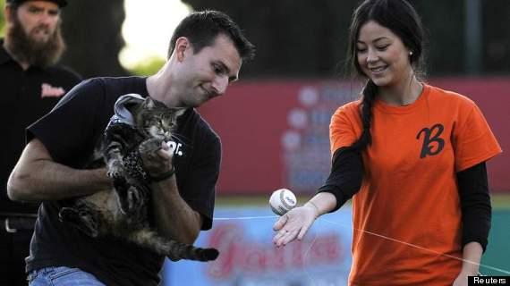 tara the cat baseball