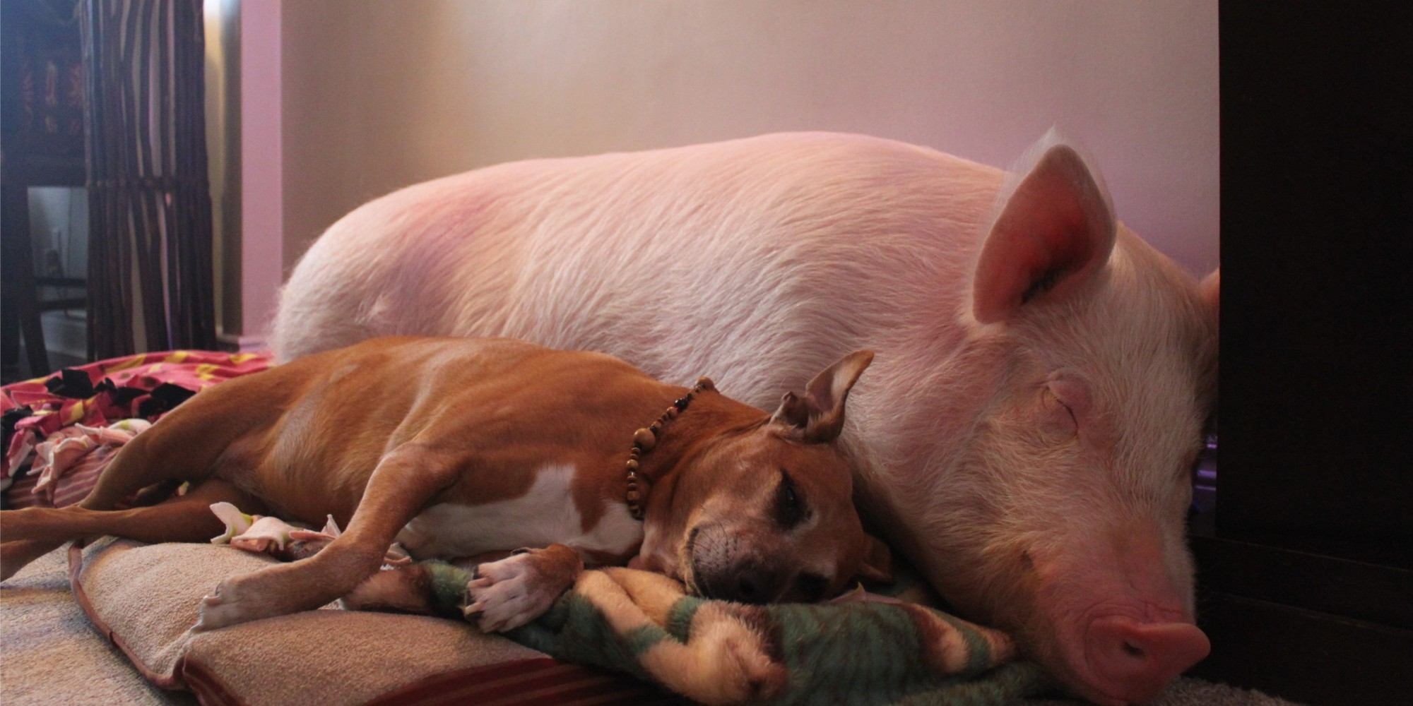 animals are more than mere things. let's treat them that way | huffpost