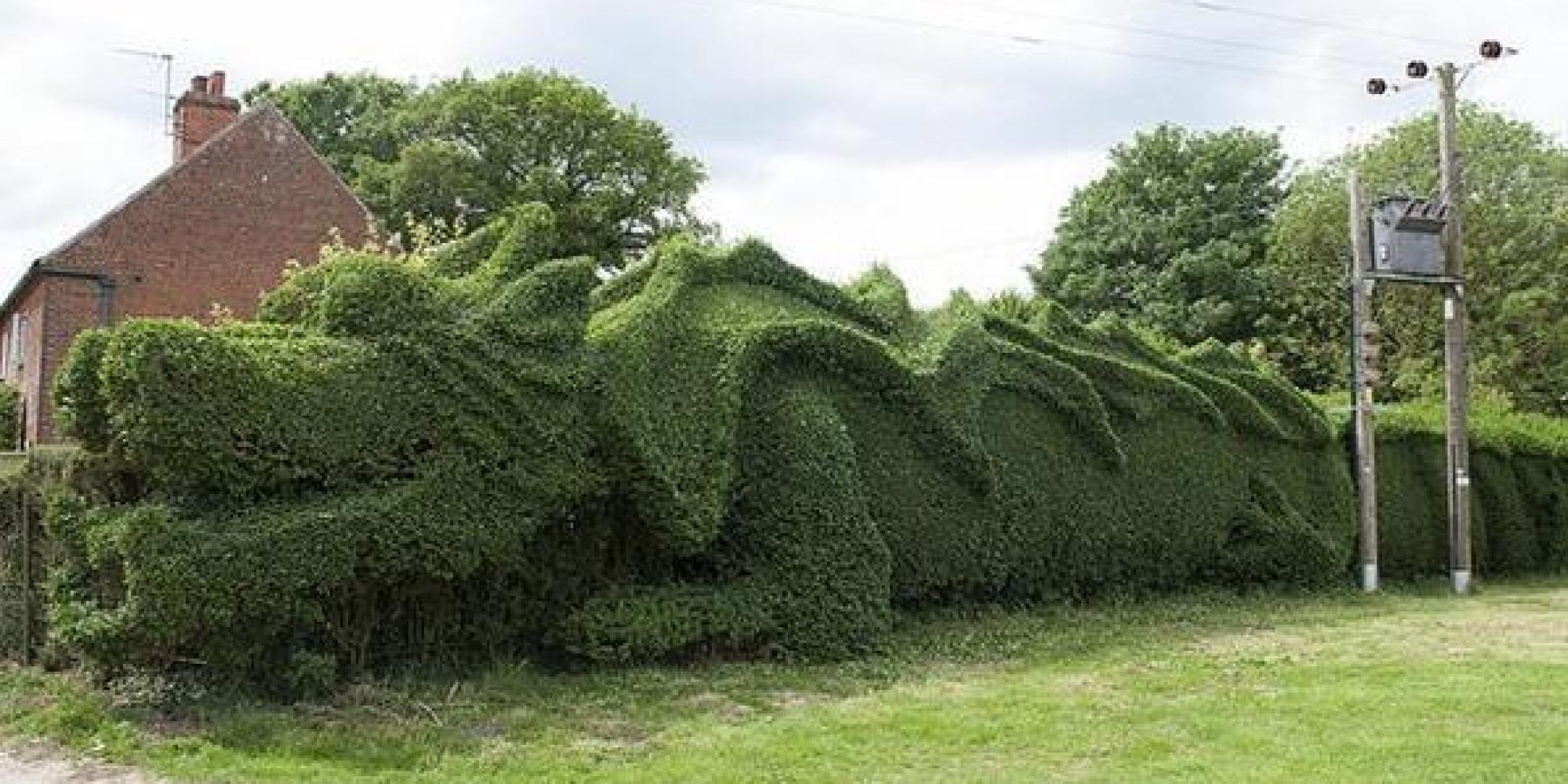 75 Year Old Transforms Boring Hedge Into Giant Dragon