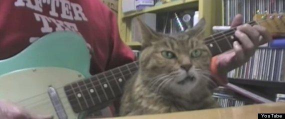 snaggletooth cat guitar