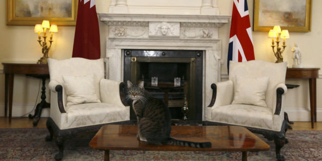 Freya The Chancellor's cat sits on a table in a room in Downing Street prior to a meeting between Prime Minister David Cameron greets the Emir of Qatar, Sheik Hamad bin Khalifa al-Thani at Downing Street in London.