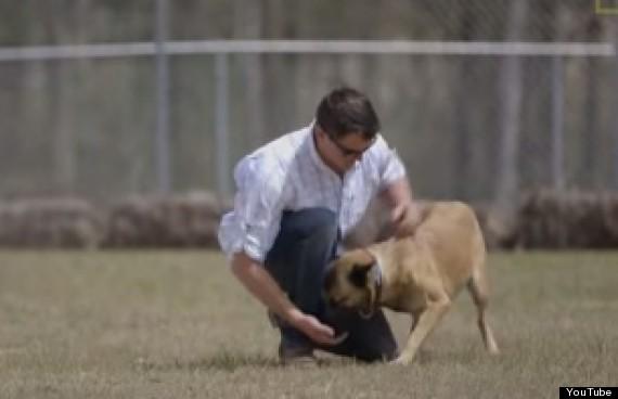 soldier adopts dog