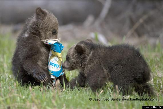 baby bears trash