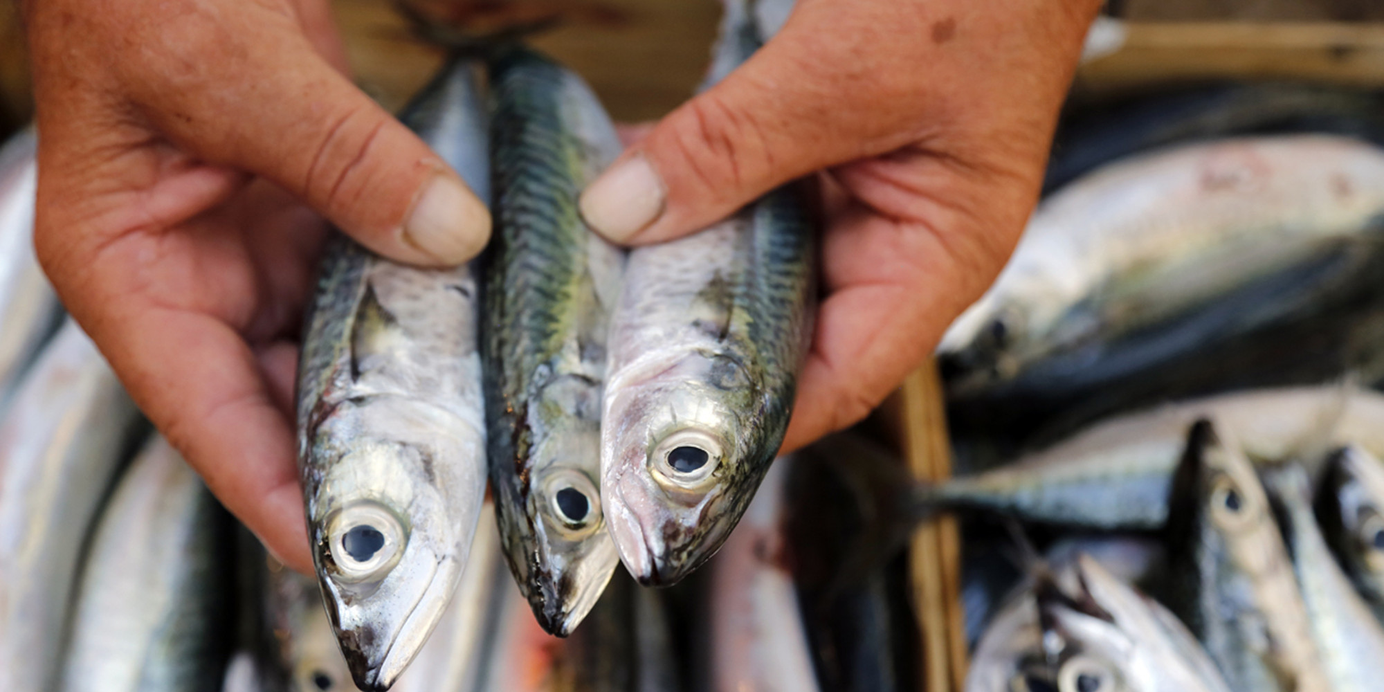 Government says eat fish not too much mostly low in for Fish that eat other fish