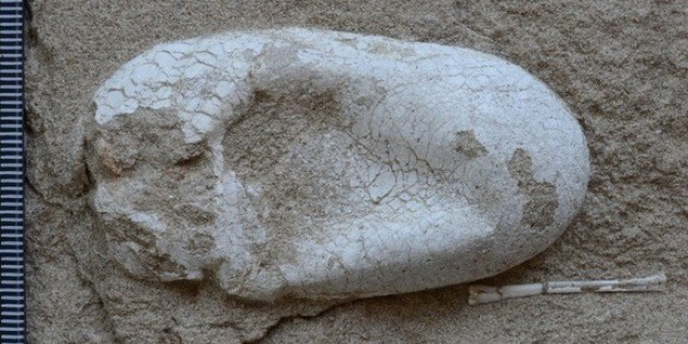 First 3D Egg Fossils Of Ancient Flying Reptiles Found In China