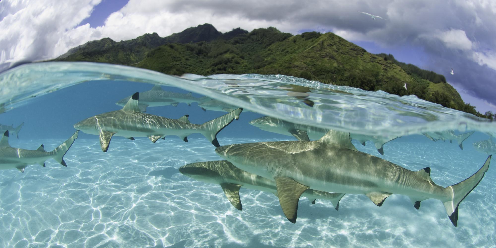teahupoo reef depth 14987 movieweb