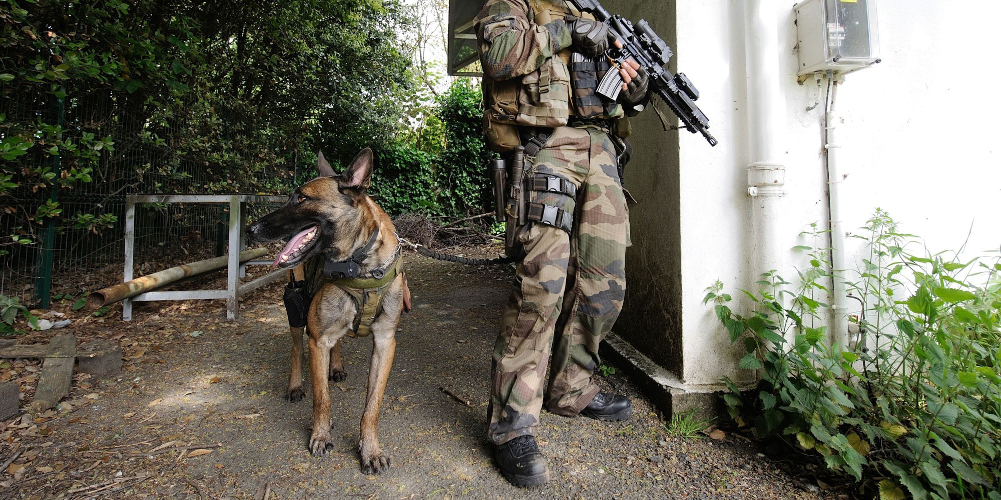 Popular Soldier Army Adorable Dog - o-DOGS-WAR-facebook  You Should Have_626241  .jpg
