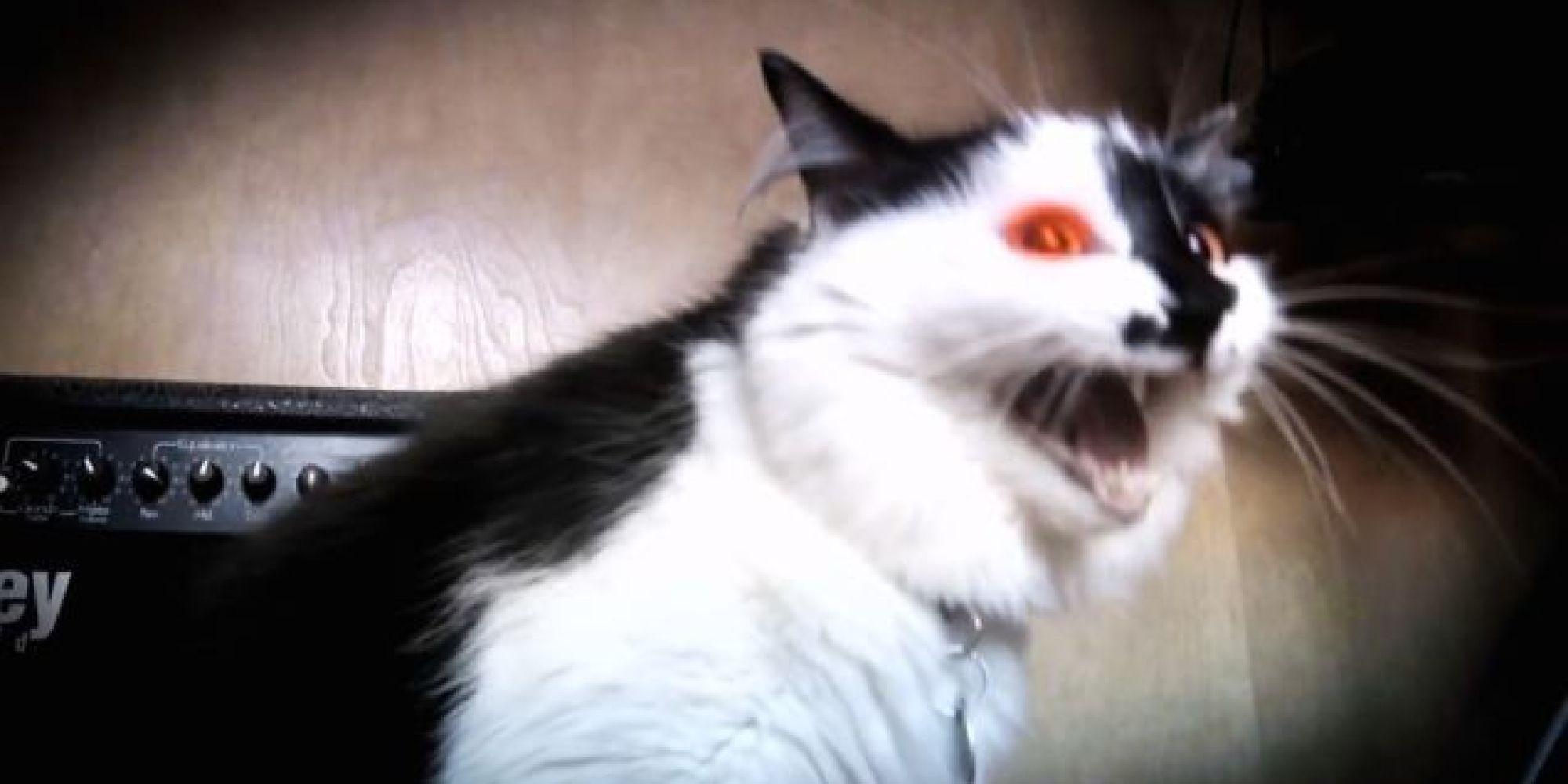 gps cat collar