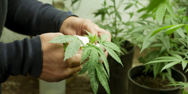 Los Angeles Set To Open Its First Medical Marijuana Farmers Market