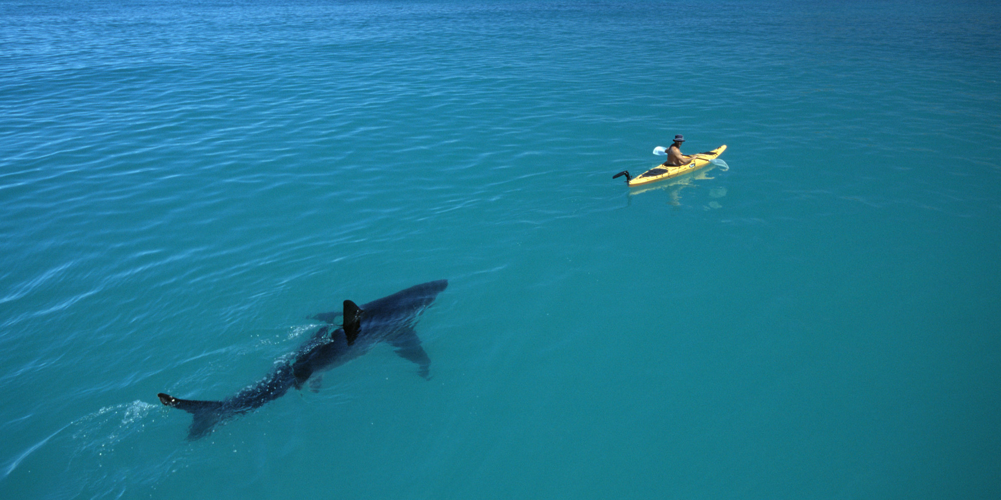 stunning photos of sharks and people document a vulnerable species