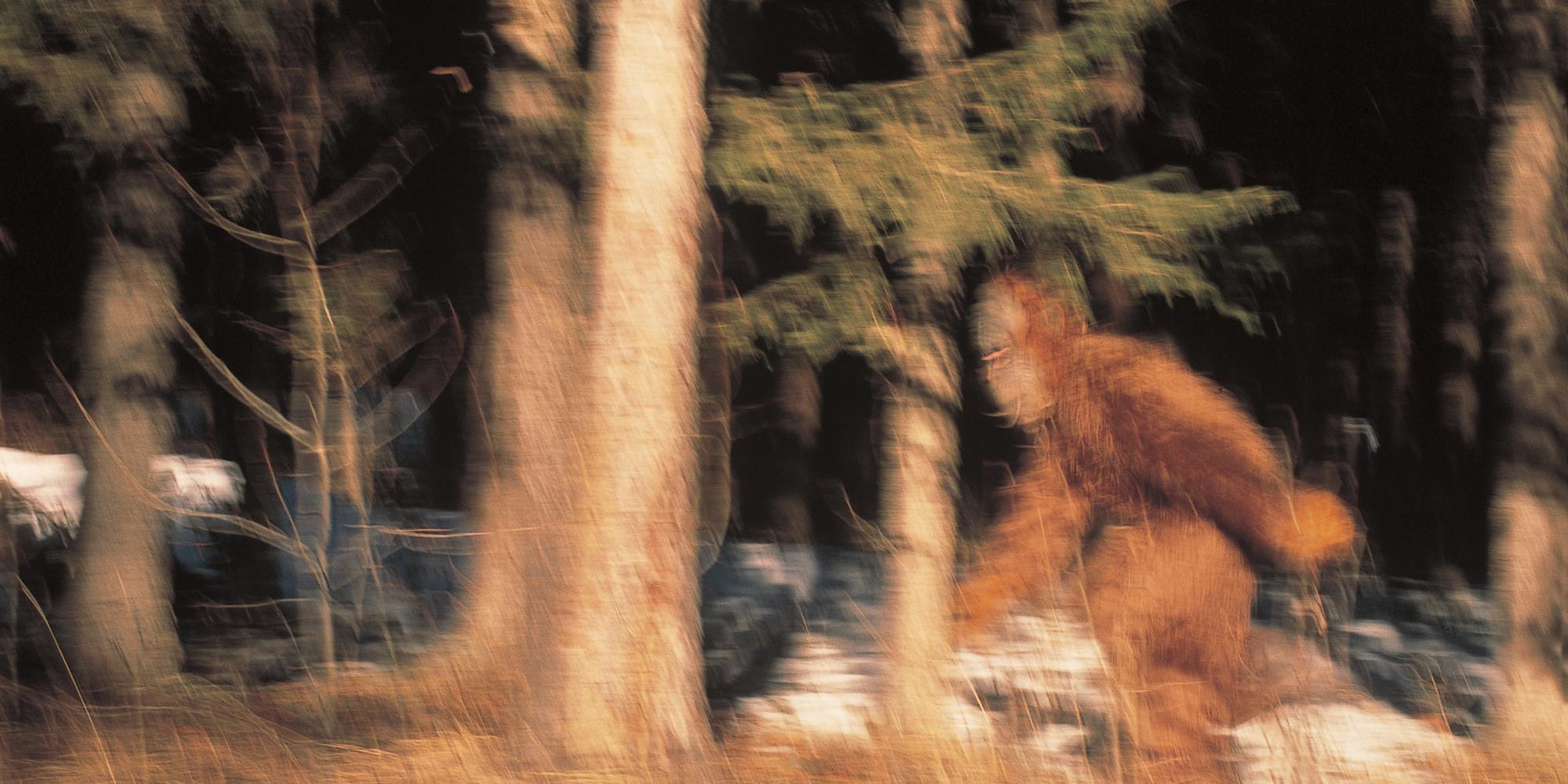 Bigfoot photos woodland ca Man who claims he killed
