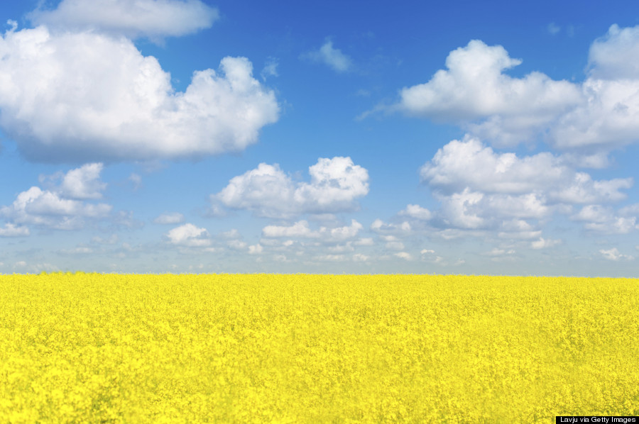 ukraine fields