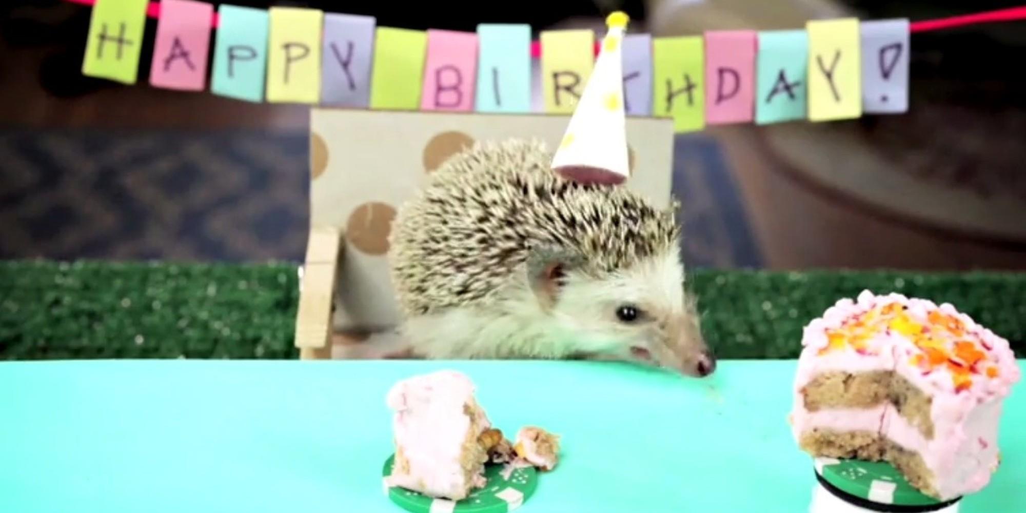 Поздравление с днем рождения, Ёжик и Ромашки День рождения 26