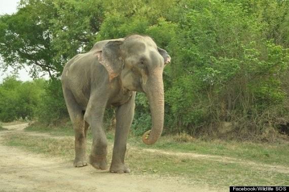 raju crying elephant