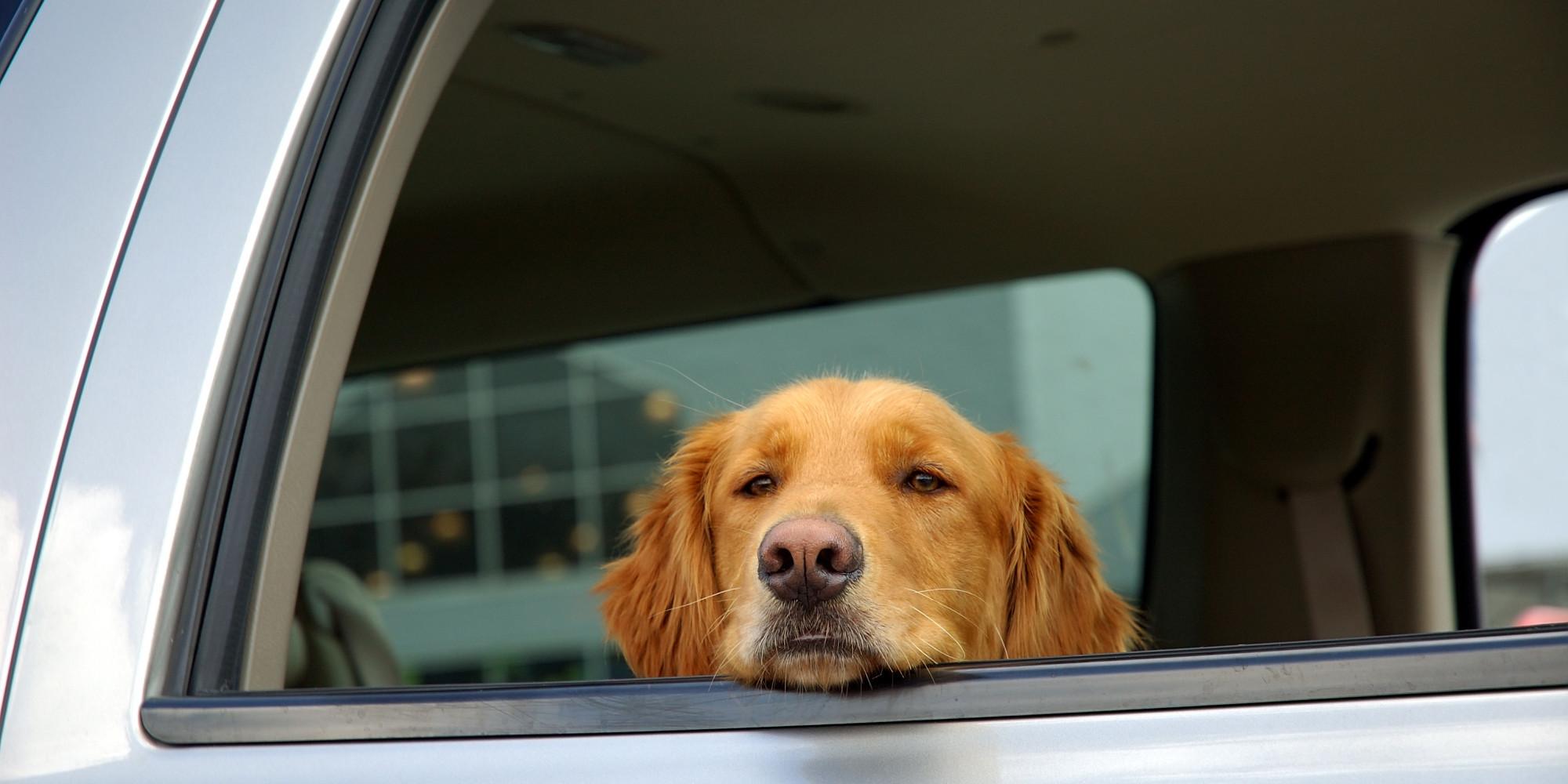 หมาในรถ