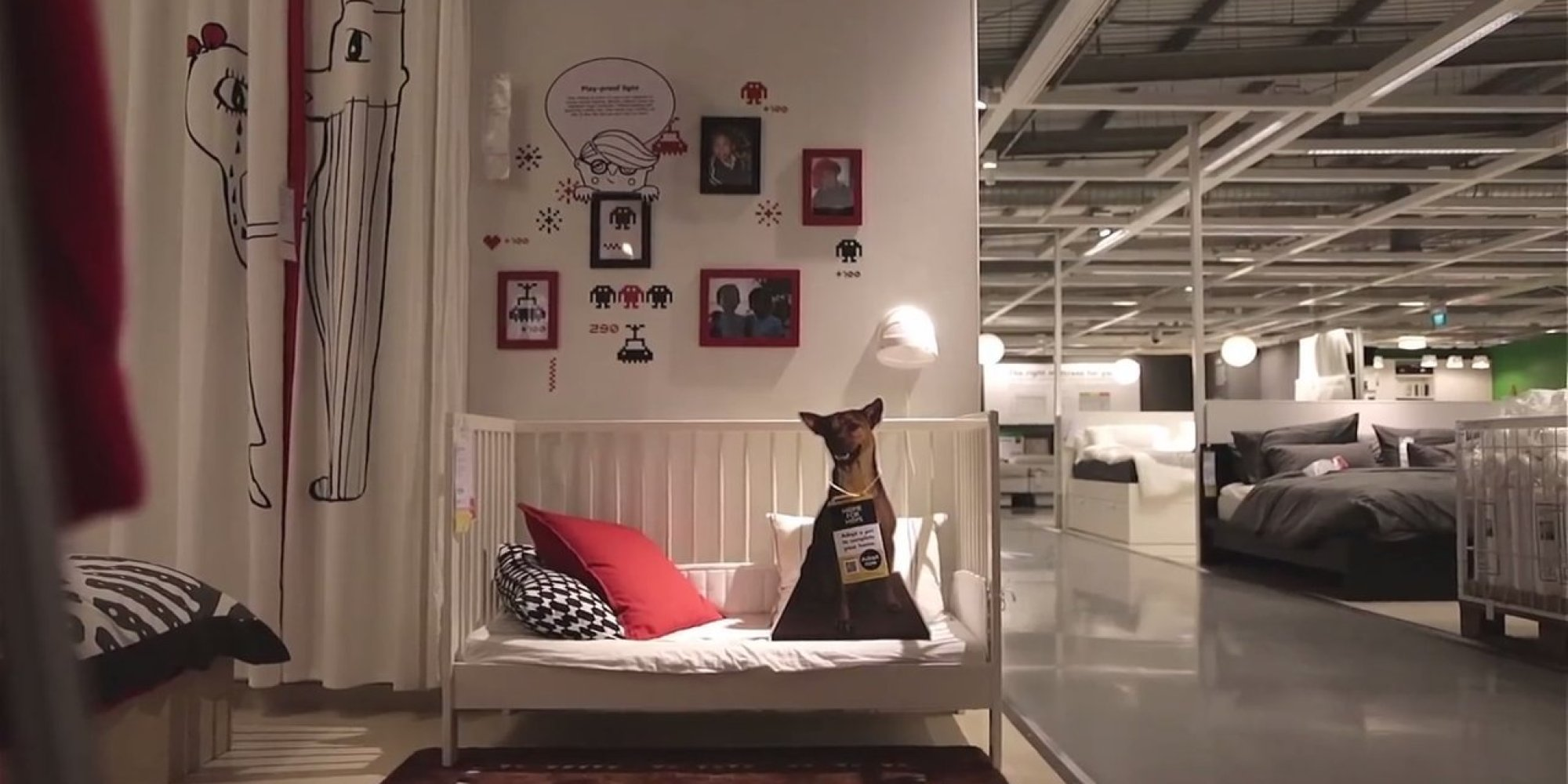Ikea Advertises Adoptable Dogs In Stores, Because Every