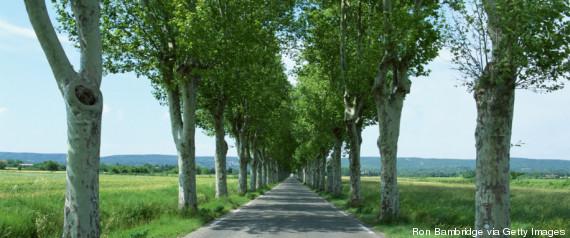 tree road france
