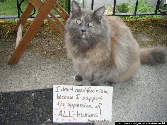 cats against feminism