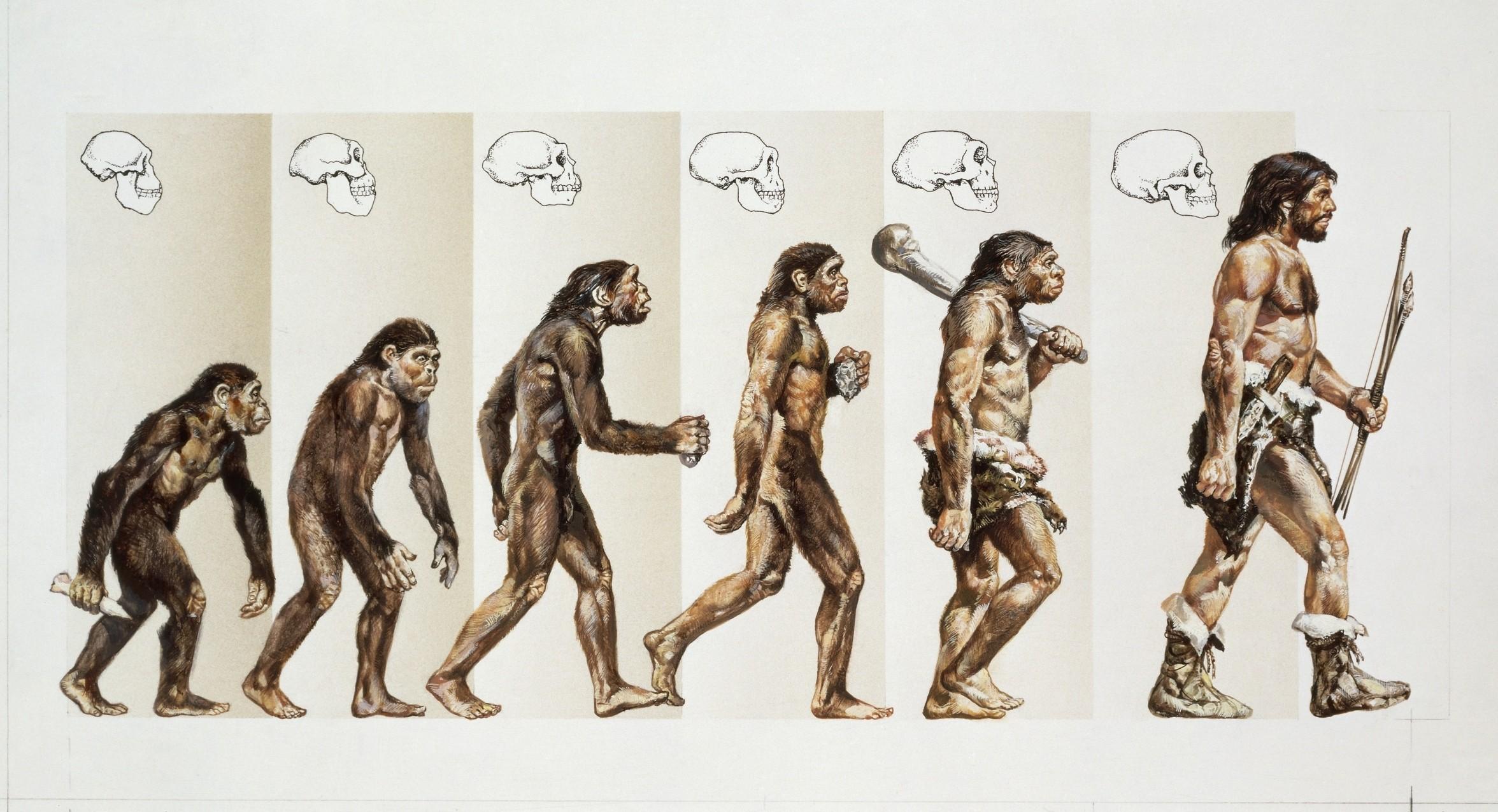 evolution monkey