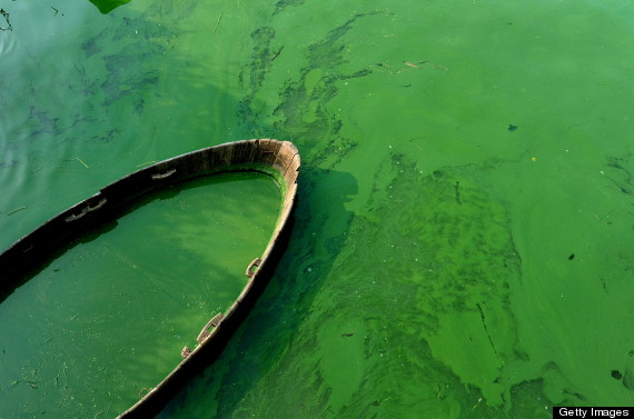 Toxic Algae Blooms Could Hurt Canadian Waters, Expert Warns (PHOTOS)