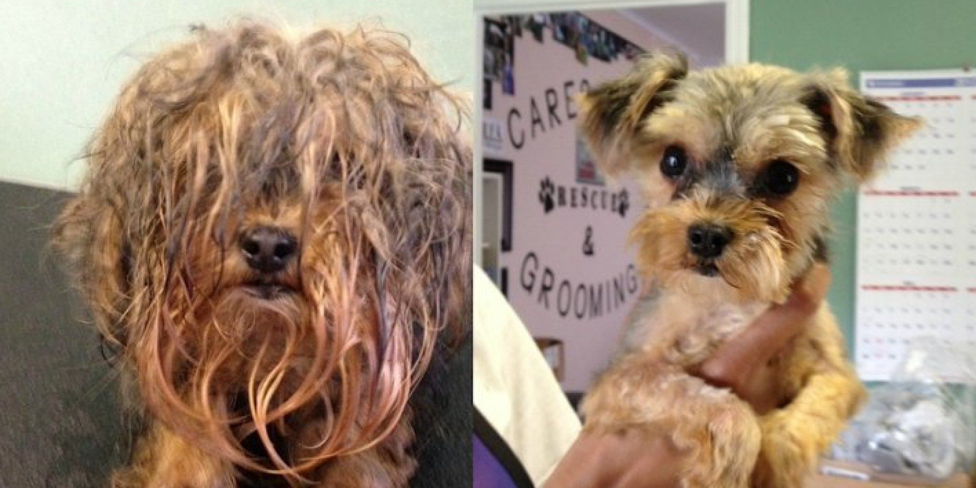 Shelter Dog Makeovers Prove Every Sad Stray Is Handsome