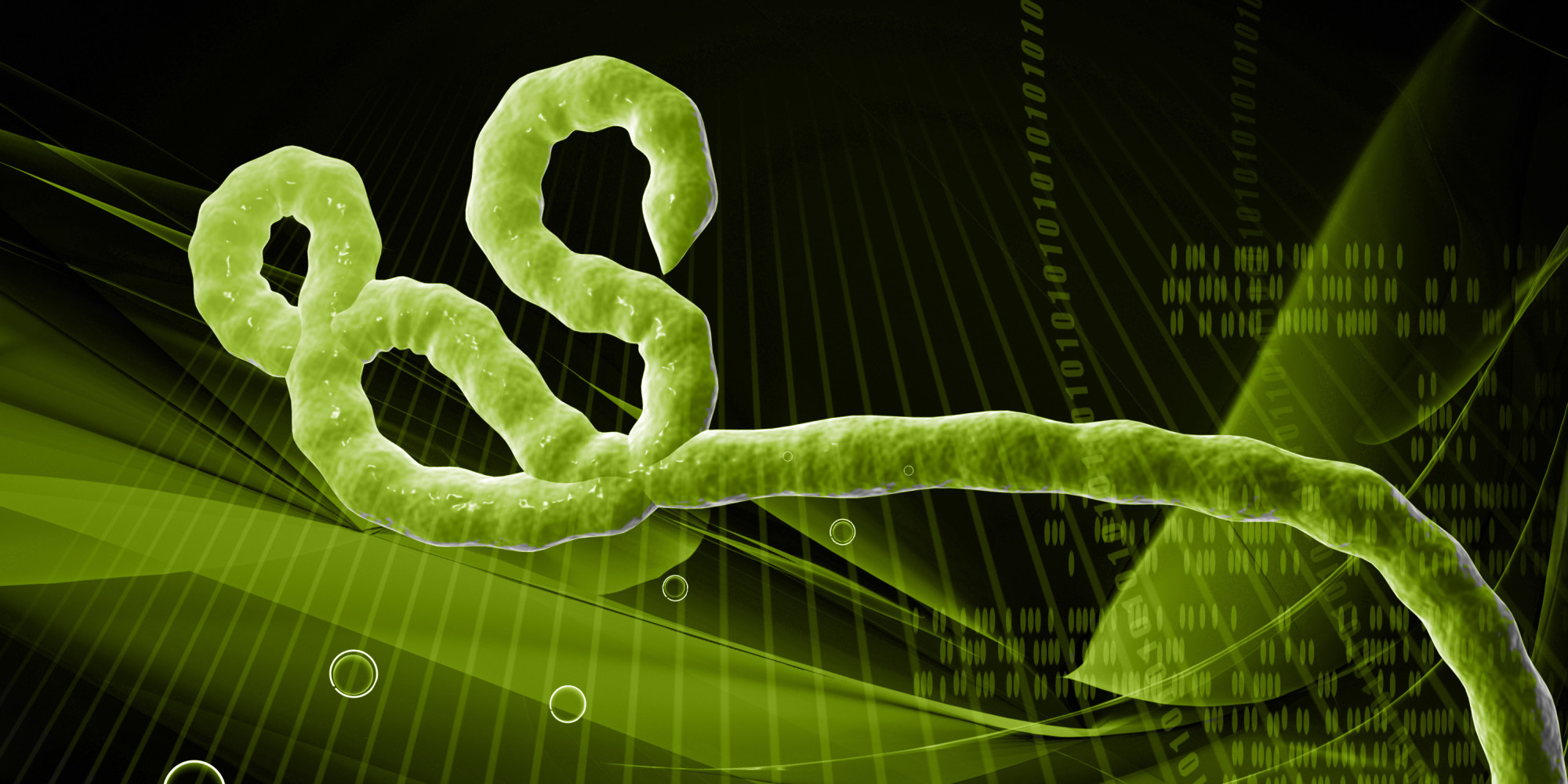 New Ebola Discovery Explains Why Virus Is So Deadly   HuffPost